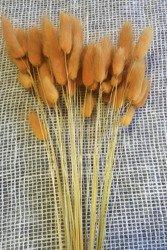 DMUSZEK JAJOWATY KOLOR POMARAŃCZOWY ~55 szt. (Lagurus ovatus) ozdobna trawa suszona