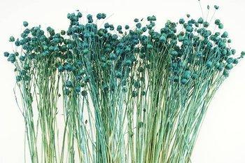 LEN KOLOR NIEBIESKI suszony barwiony dodatek florystyczny pęczek 45-50 cm