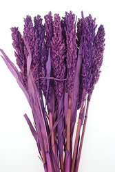 SENEGAL SORGO KOLOR FIOLETOWORÓŻOWY susz roślinny do dekoracji rośliny na suche bukiety