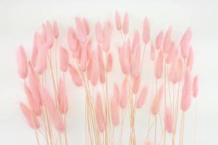 DMUSZEK JAJOWATY KOLOR BLADORÓŻOWY (Lagurus ovatus) ozdobna trawa suszona