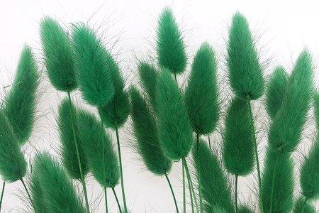 DMUSZEK JAJOWATY KOLOR CIEMNOZIELONY ~55 szt. (Lagurus ovatus) ozdobna trawa suszona