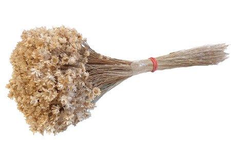 GLIXIA KOLOR NATURALNY 1 gliksja niebarwiona krótszy pęczek suszki dekoracyjne