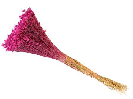 GLIXIA KOLOR RÓŻOWY FUKSJA gliksja suszki dekoracyjne