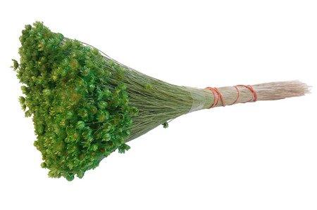 GLIXIA KOLOR ZIELONY gliksja kwiaty suszone suszki dekoracyjne