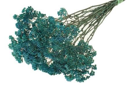 KRWAWNIK POSPOLTY KOLOR NIEBIESKI (Achillea millefolium) barwiony susz roślinny do dekoracji