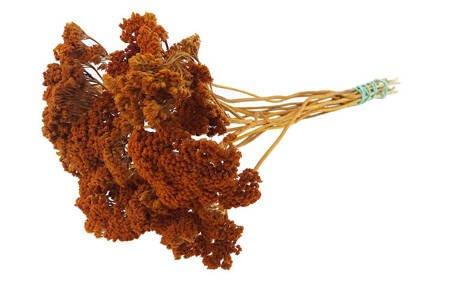 KRWAWNIK WIAZÓWKOWATY KOLOR RUDY (Achillea filipendulina) kwiaty suszone susz roślinny do dekoracji