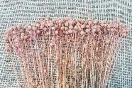 LEN KOLOR JASNORÓŻOWY suszony barwiony dodatek florystyczny pęczek 45-50 cm