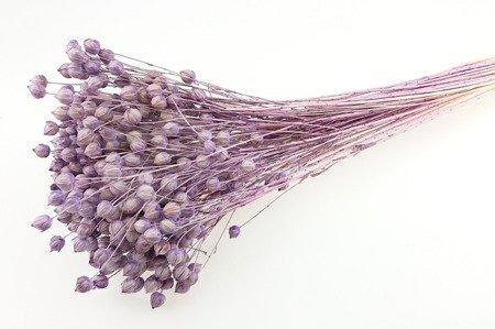 LEN KOLOR LAWENDOWY pęczek XL 100 g suszony barwiony dodatek do stroików i bukietów