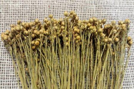 LEN KOLOR NATURALNY pęczek XL 100 g suszony niebarwiony dodatek do stroików i bukietów