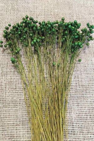 LEN KOLOR SOCZYSTOZIELONY suszony barwiony dodatek florystyczny pęczek 45-50 cm