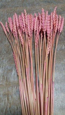 PSZENICA KOLOR RÓŻOWY zboże suszone barwione pęczek 50 cm