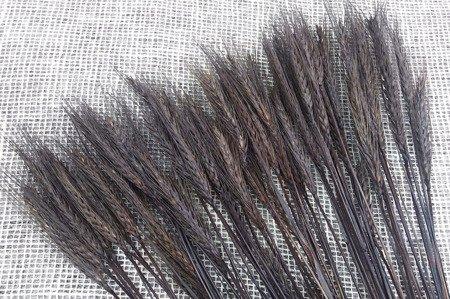 PSZENŻYTO KOLOR BRUNATNY (brązowy) zboże suszone barwione susz krajowy