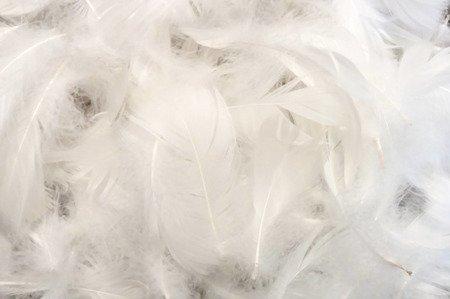 Piórka dekoracyjne kolor biały opakowanie foliowe