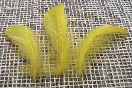 Piórka dekoracyjne kolor żółty opakowanie foliowe