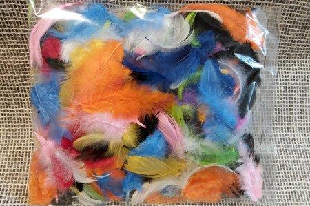 Piórka dekoracyjne różne kolory opakowanie foliowe mix kolorystyczny
