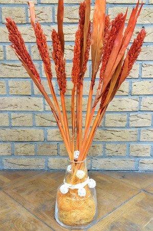 SENEGAL SORGO KOLOR CZERWONY susz roślinny do dekoracji rośliny na suche bukiety