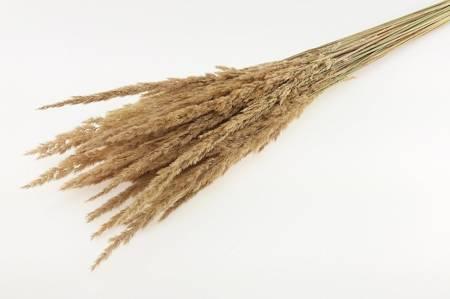 TRAWA LEŚNA KOLOR NATURALNY SŁOMKOWY trawa suszona niebarwiona do wazonu