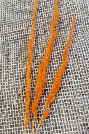 TRAWA LEŚNA KOLOR POMARAŃCZOWY trawa suszona barwiona